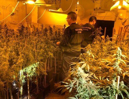 La Guardia Civil detiene a dos personas e interviene un total de 529 plantas de marihuana en Arjona (Jaén)