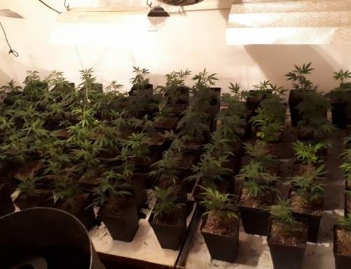 Detenido en Soria por cultivar marihuana y robar multitud de herramientas