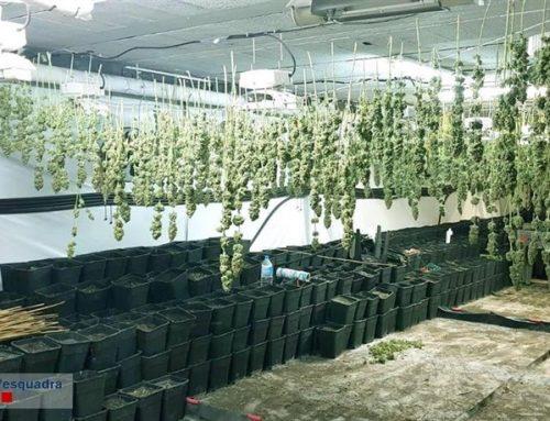 Intervienen 160 kilos de cogollos de marihuana en una nave en Vulpellac (Girona)
