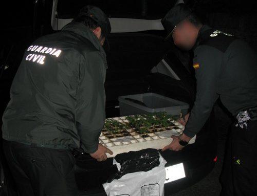 La Guardia Civil intercepta en Cambados un vehículo que transportaba 37 plantas de marihuana