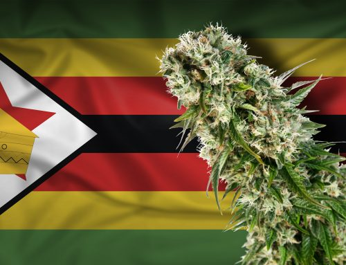 Zimbabue licenciará a 37 cultivadores de cannabis después de más de 200 solicitudes