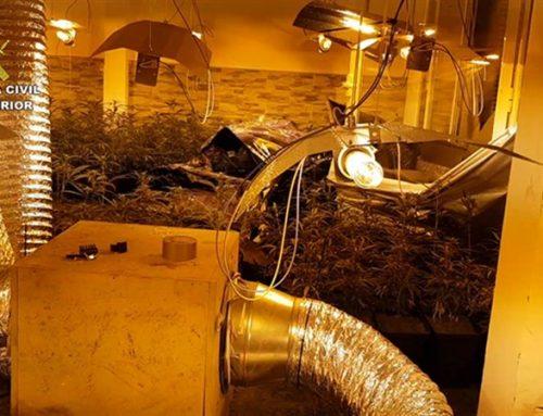 Detenidas siete personas y desmanteladas tres plantaciones de marihuana en Toledo