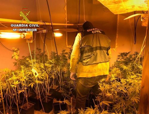 Dos detenidos e intervenidas 400 plantas cultivadas en bloques de viviendas de Roquetas